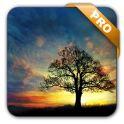 دانلود تصویر زمینه زنده غروب خورشید Sunset Hill Pro Live Wallpaper v1.0.1 اندروید