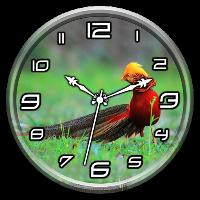 دانلود Golden Pheasant Clock Live WP v1.1 نرم افزار ساعت لایو برای والپیپر اندروید