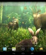 دانلود تصویر زمینه متحرک جنگل Forest HD v1.5.1