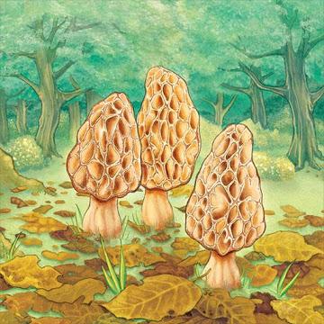 دانلود Morels 1.02.00 – بازی کارتی قارچ های خوراکی اندروید